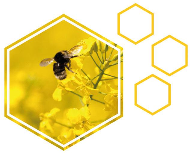 krema s čebeljim strupom